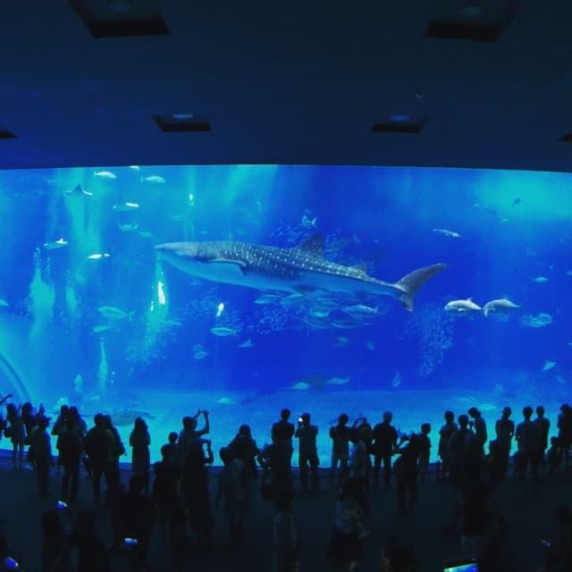 水族館の大型水槽の使用例